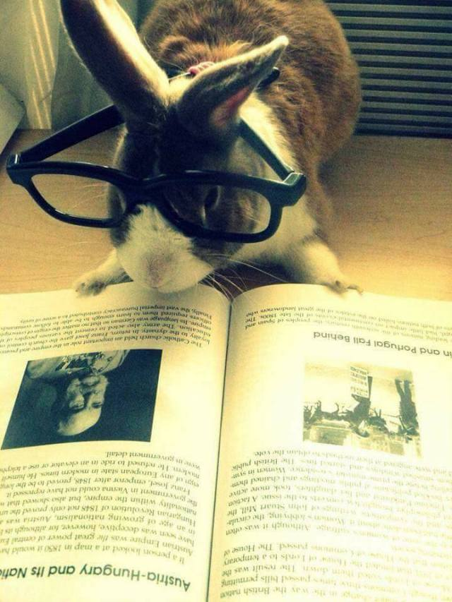 bunny glasses reading.jpg