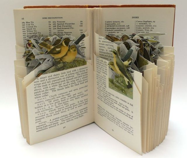 birds emerging book
