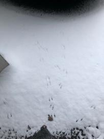 bird tracks.jpg
